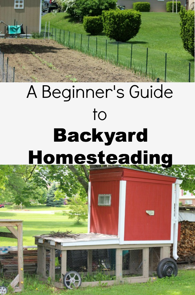 Backyard Homesteading Guide