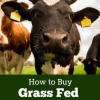 How to Buy Hormone Free, Grass Fed Beef