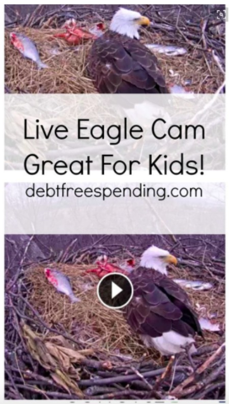 Live Eagle Cam PA Game Commission - Debt Free Spending