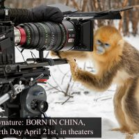 Clips from Disneynature – BORN IN CHINA, in theaters April 21 #BornInChina