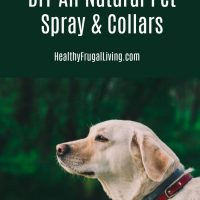 DIY All Natural Pet Spray & Collars